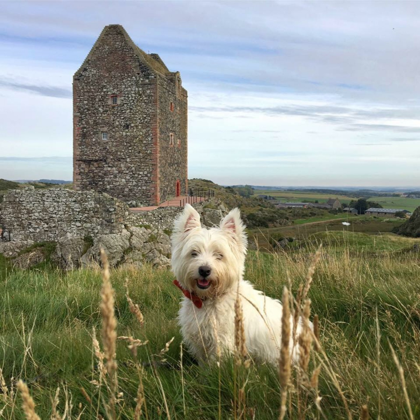 Scotland with the Wee White Dug